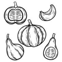 conjunto de ilustração vetorial vintage de abóbora desenhada à mão vetor