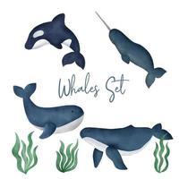 conjunto de baleias em aquarela vetor