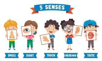 conceito dos cinco sentidos com órgãos humanos vetor