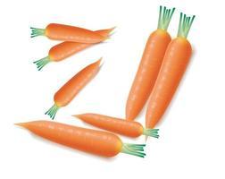 conjunto de cenoura fresca isolada no fundo branco vetor