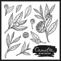 conjunto de flores e folhas de camélia vetor