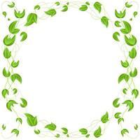 círculo de folhas verdes na borda de um galho isolado no fundo branco vetor