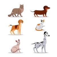 conjunto de design de personagens de gatos e cães vetor