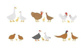aves de fazenda, gansos, frango e perus vetor