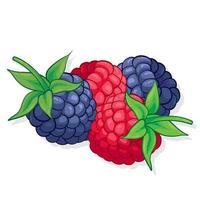 ilustração de fruta doce de framboesa e amora para web isolada no fundo branco vetor