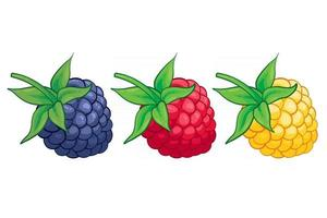 ilustração de frutas doces amora vermelha e amarela framboesa para web isolada no fundo branco vetor