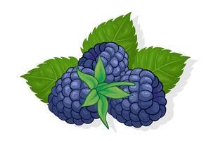 ilustração de frutas doces amora para web isolada no fundo branco vetor
