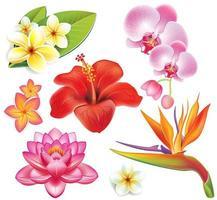 conjunto de flores tropicais vetor