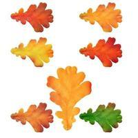 folhas de carvalho isoladas em um fundo branco vetor