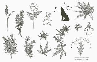linha coleção de ervas com alecrim, lavanda, cannabis. Ilustração vetorial para ícone, adesivo, para impressão e tatuagem vetor