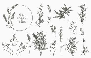 linha coleção de ervas com alecrim vetor