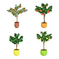árvores de frutas cítricas definir mudas caseiras de tangerina toranja limão e lima em vasos de flores ilustração vetorial vetor