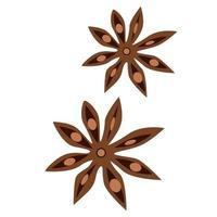anis estrelado bodyan planta pimpinella anisum tempero aromático para diferentes pratos e bebidas tempero para gráficos vetoriais de vinho quente vetor