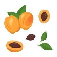 Conjunto de ícones de frutas de damasco. frutos maduros brilhantes, metades, fatias com folhas e sementes. alimentos para uma dieta saudável, sobremesa, lanche. elementos para design de verão. ilustração em vetor plana