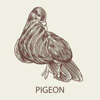desenho de gravura desenhada à mão de pombo em estilo vintage vetor