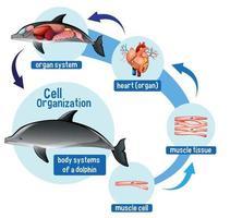 diagrama mostrando a organização celular em um golfinho vetor