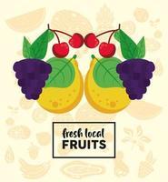 letras de frutas locais frescas com uvas e frutas vetor