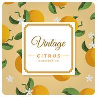 Ilustração em vetor fundo liso Citrus Vintage