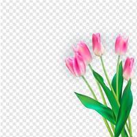 ilustração vetorial realista tulipas coloridas vetor