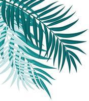 linda palmeira com folhas de ilustração vetorial de fundo de silhueta vetor