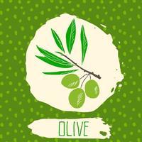 azeitona mão desenhada esboçado fruta com folha no fundo com padrão de pontos. doodle vetor verde-oliva para logotipo, etiqueta, identidade de marca.
