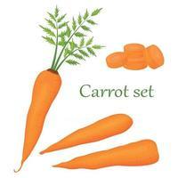 cenoura conjunto de desenho animado laranja cenoura isolado em um fundo branco. ícones vetoriais de raízes frescas vetor