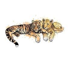 filhote de leão e filhote de tigre de um toque de aquarela desenhado à mão desenho ilustração vetorial de tintas vetor