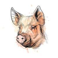 retrato de uma cabeça de porco de um respingo de aquarela signo do zodíaco chinês ano de porco desenho desenhado à mão ilustração vetorial de tintas vetor