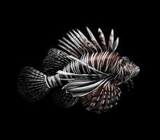retrato de peixe tropical de um peixe-leão em uma ilustração vetorial de fundo preto vetor