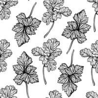 padrão de salsa. especiarias aromáticas, ervas saudáveis. ilustração vetorial desenhada à mão vetor