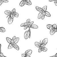manjericão padrão sem emenda. ervas italianas. um raminho de manjerona. o manjericão é um tempero perfumado e perfumado. ilustração desenhada à mão vetor