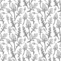 padrão sem emenda de rúcula. folhas de rúcula em um fundo branco. tempero italiano picante e aromático. ilustração vetorial desenhada à mão vetor