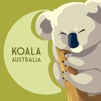 coala marsupial australiano animal vida selvagem vetor
