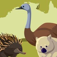 emu wombat e ouriço australiano continente mapeiam animais selvagens vetor