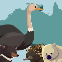 avestruz wombat ouriço do continente australiano mapa da vida selvagem animal vetor