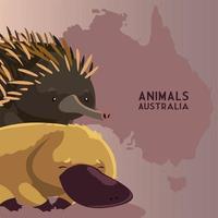 ouriço e ornitorrinco continente australiano mapeiam animais selvagens vetor
