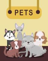 animais de estimação pendurados em cães e gatos vetor