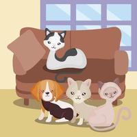animais domésticos animais gatos fofos e cachorro sofá sala casa vetor
