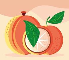 comida laranja pêssego vetor