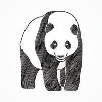 vetor desenho de panda