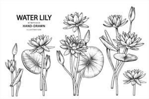 flor de nenúfar esboço desenhado à mão ilustrações botânicas conjunto decorativo vetor