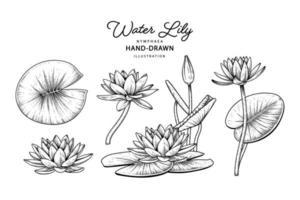 Elementos da flor do lírio d'água esboço desenhado à mão ilustrações botânicas vetor