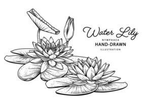 flor de lírio d'água esboço desenhado à mão ilustrações botânicas vetor