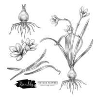 chuva lírio flor mão desenhada esboço elementos ilustrações botânicas conjunto decorativo vetor