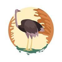 cena da natureza animal avestruz selvagem vetor