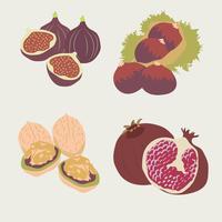 Frutas do outono vetor