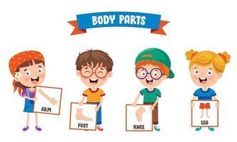 partes do corpo humano vetor
