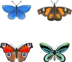 conjunto de borboletas coloridas vetor