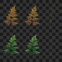 conjunto de samambaia dourada e palmeira isolada vetor