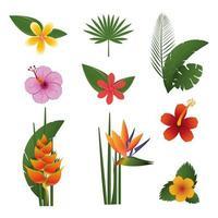 feixe de flores tropicais exóticas vetor